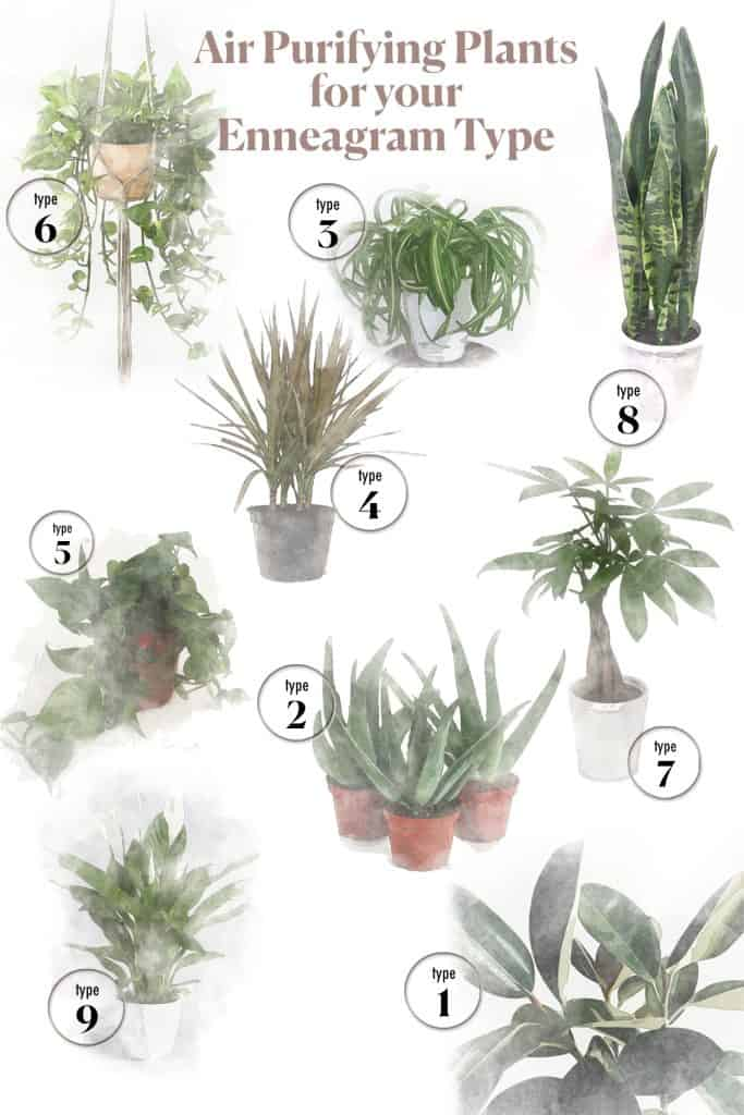 "An infographic of watercolored plants with the title ""Air Purifying Plants for your Enneagram Type"" listed at the top."